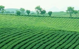 Hà Nội thúc tiến độ cấp giấy sử dụng đất nông, lâm trường
