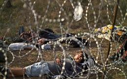 Hungary xây hàng rào trên biên giới để ngăn người di cư