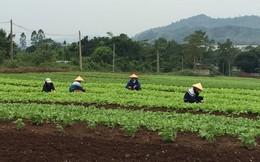 Doanh nghiệp kỳ công sản xuất sản phẩm hữu cơ tiêu chuẩn châu Âu và Mỹ trên đất Việt