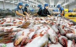 Sửa đổi quy định nuôi, chế biến và xuất khẩu cá tra