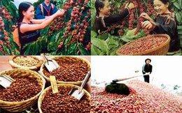 Sắp xếp, đổi mới Công ty nông nghiệp và tái cơ cấu TCT Cà phê Việt Nam