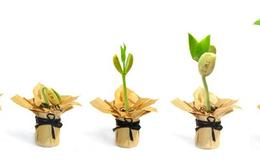 Ntaco trình kế hoạch phát hành thêm 12 triệu cổ phiếu, ông Mạc Quang Huy ứng cử vào HĐQT
