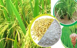 GS. Võ Tòng Xuân: Lúa gạo cũng gia công, trợ cấp cho người mua thế giới?