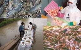 """""""Xuất khẩu thủy sản giảm đừng đổi lỗi cho Trung Quốc"""""""