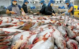 4 doanh nghiệp thủy sản ABT, AGF, ACL, AAM: Lãi quý 1 sụt giảm so với cùng kỳ