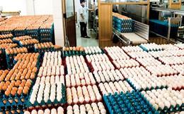 Bộ Công Thương tăng hạn ngạch nhập khẩu trứng gia cầm