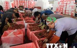 Doanh nghiệp Việt tăng tốc đón đầu FTA với Liên minh Kinh tế Á-Âu