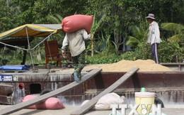 ĐBSCL mới thực hiện được gần 8% chỉ tiêu mua gạo tạm trữ
