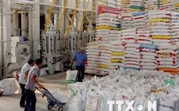 Hiệp hội Lương thực sẽ tiêu thụ hết lúa hàng hóa cho nông dân