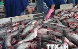 Các nghị sỹ Mỹ trình Nghị quyết bỏ áp quy định mới về cá da trơn