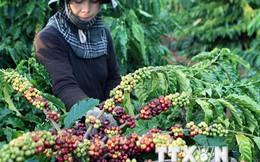 Thay đổi phương thức sản xuất để nâng giá trị cà phê xuất khẩu