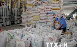 Nâng mức giá sàn xuất khẩu gạo 25% tấm thêm 10 USD mỗi tấn