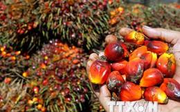 Indonesia và Malaysia sẽ thành lập Hội đồng sản xuất dầu cọ