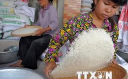 Campuchia khó đạt mục tiêu xuất 1 triệu tấn gạo trong năm nay