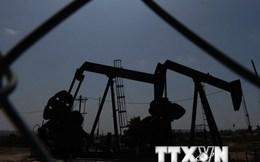 Dầu mỏ của Mỹ có khả năng sẽ tràn ngập thị trường quốc tế