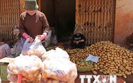 Cấm đưa khoai tây Trung Quốc vào bán tại Chợ nông sản Đà Lạt