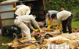 """""""Siết"""" việc nhập lậu gia súc qua biên giới để ngăn dịch bệnh lây lan"""