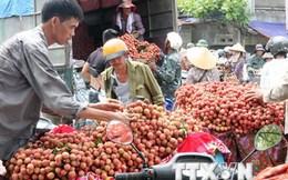 Khẩn trương phổ biến quy định của thị trường nhập khẩu vải tươi