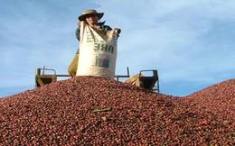 Quy định mới của Hàn Quốc gây khó cho nông sản Việt Nam