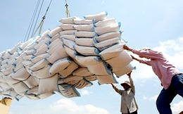 """Suýt """"mất trắng"""" 63 container gạo"""