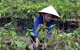 Trái cây mất mùa, nguồn cung giảm
