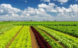 PAN Group chuyển nhượng 75% vốn tại Vinaseed sang cho PAN FARM