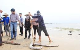 Bộ TN&MT yêu cầu các tỉnh hàng ngày báo cáo kết quả xác định nguyên nhân cá chết