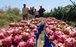 Bình Thuận xử phạt nhiều thương lái Trung Quốc kinh doanh trái phép