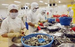 Thủy sản Việt Nam bị EU cảnh báo nhiễm kháng sinh: Trách nhiệm thuộc về ai?
