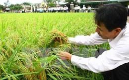 Ngành nông nghiệp giảm khoảng 100.000ha đất trồng lúa năm nay