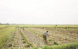 Phát triển lúa gạo: Cần thay đổi tư duy