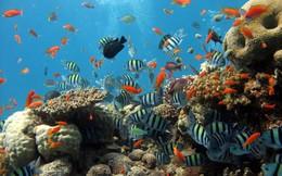 Lập khu bảo tồn biển gần 8.000 ha ở đảo Lý Sơn