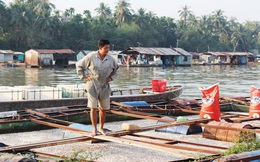 Dân làng bè lâm nợ sau cá chết
