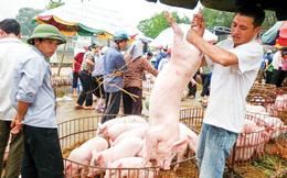 Ồ ạt xuất khẩu lợn sang Trung Quốc: Coi chừng 'dội biên' như dưa hấu