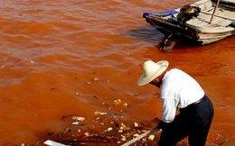 Thủy triều đỏ khiến cá biển chết là do con người gây ô nhiễm?