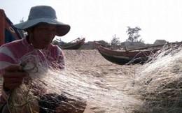 """""""Không có chuyện cá chết xếp lớp ở biển Quảng Bình"""""""