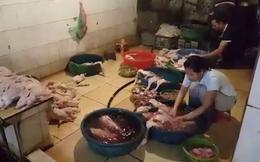 Kinh hãi những con gia cầm trong lò giết mổ 'chui', dán mác thịt sạch vào siêu thị