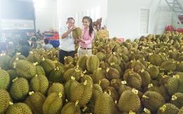 Khi trái cây quá lệ thuộc thị trường Trung Quốc