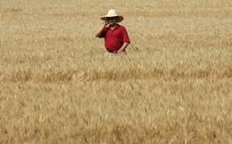 """""""Canh bạc"""" mới nhất của Apple: Phủ sóng iPhone đến cả những người nông dân!"""
