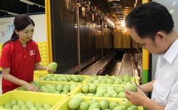 Xuất khẩu trái cây VN bị cản đường