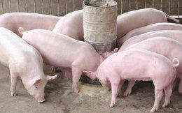 Chủ trang trại vẫn lén lút sử dụng chất cấm