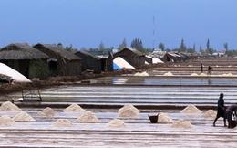 Muối Bạc Liêu tràn đồng, kho dự trữ hoang phế
