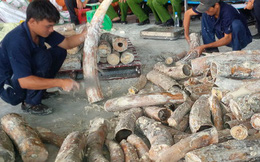 Việt Nam là điểm trung chuyển của đường dây buôn lậu ngà voi