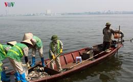 Cá chết ở Hồ Tây cơ bản được dọn dẹp xong