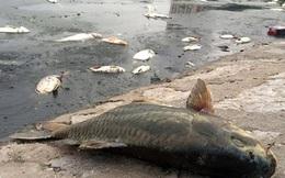 Chủ tịch Chung chỉ đạo xử lý gấp cá chết nổi trắng hồ Hoàng Cầu