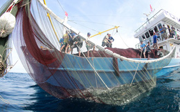 Không có chuyện độc quyền bảo hiểm tàu cá