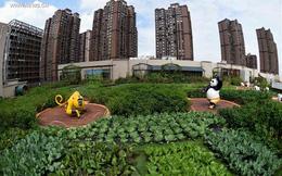 Đi khắp nơi để ngắm những khu vườn trên mái nhà tuyệt  đẹp