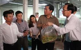 """""""Tắc"""" xuất khẩu cá chép, Bí thư Thăng điện khẩn cấp Bộ trưởng Phát"""