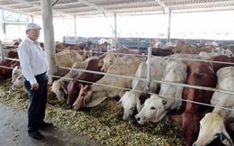 6 tháng nhập khẩu trên 100 nghìn con bò Australia