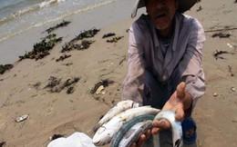 Formosa Hà Tĩnh sử dụng chất cực độc để súc rửa đường ống